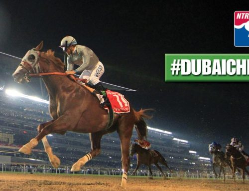 California Chrome's Dubai World Cup Win Named NTRA Moment of the Year